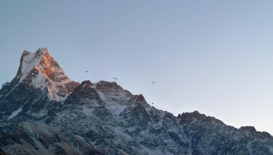 machhapuchhre model trekking nepal