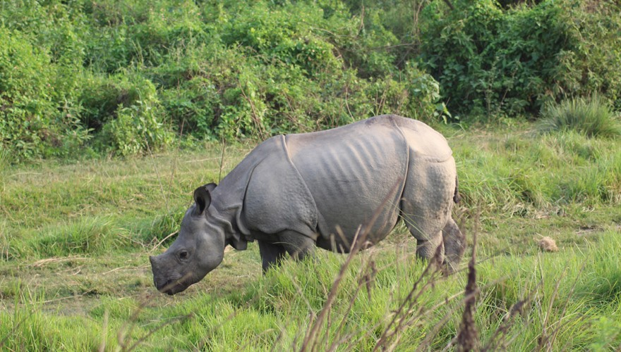 safari tour in nepal chitwan