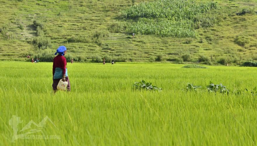 village farming volunteering nepal
