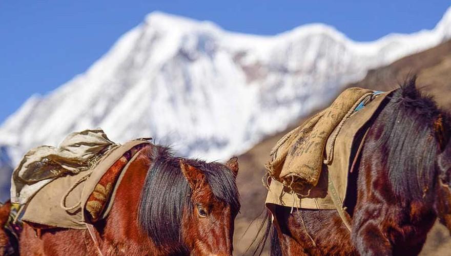 yaksa trek in bhutan