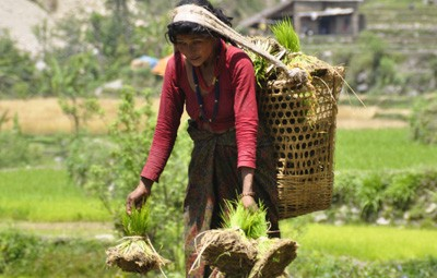 village farming sustainable